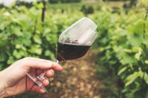 W jaki sposób podawać i z czym parować wino czerwone